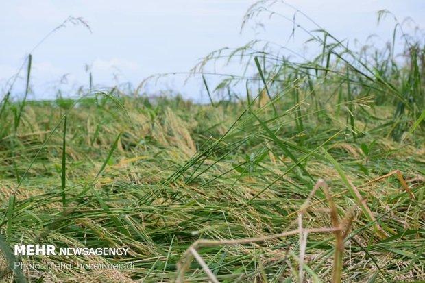 پرداخت سالانه 400 میلیارد تومان خسارت به کشاورزان و دامداران کشور