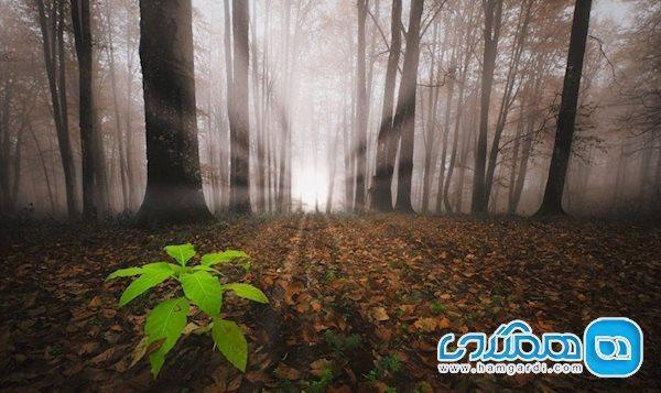 در جنگل راش پای خورشید به زمین نمی رسد