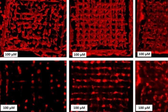 روشی برای کنترل رفتار سلول در داربست های سه بعدی