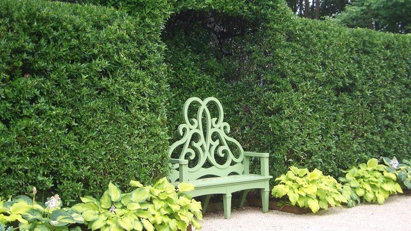 گیاهان مناسب پرچین و حصار ؛ از خاردارها تا گلدارها