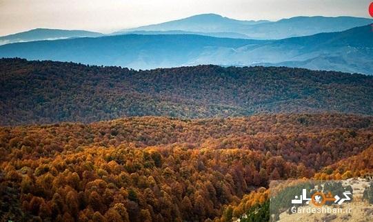 آشنایی با جنگل های راش مازندران، عکس