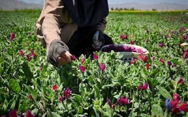 رشد 80 درصدی پوشش گیاهان مراتع، با اجرای طرح توسعه گیاهان دارویی