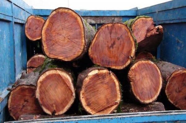 افزایش کشفیات قاچاق چوب آلات جنگلی در استان